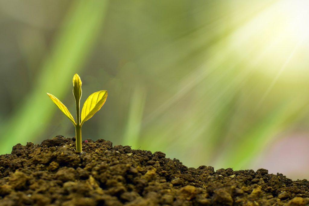 土から芽が生える様子